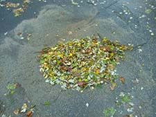 Storm Drain Covered by Leaves